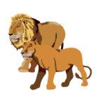 ライオンの餌にジビエ料理を!イノシシ・鹿の害獣の有効活用法