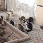野良猫 に餌を与えては だめ!との注意も与える方からの逆切れに注意を